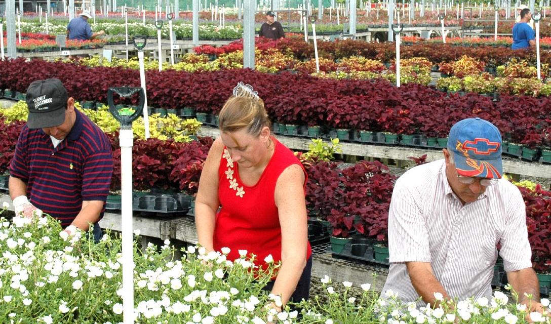 Plant Nursery Habcenter